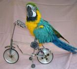NJ-NY-parrots-2