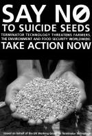 teminaor seeds